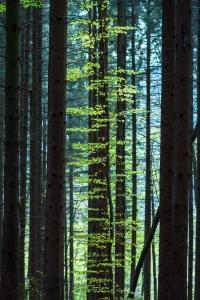 Górska agroturystyka – szlaki dla turystów i noclegi